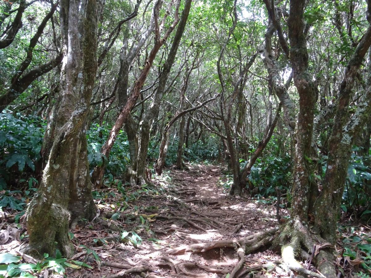 Forêt ile de la Réunion , Randonnée
