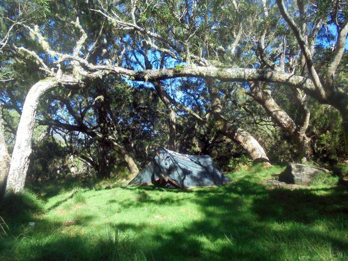 Camping à la plaine des tamarins, ile de la réunion
