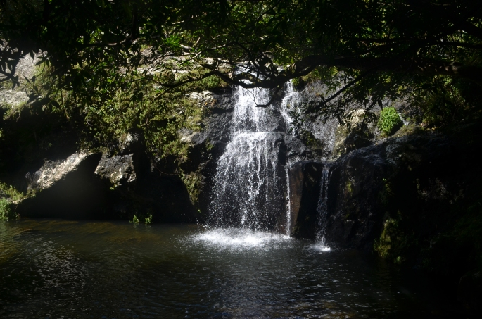 Bassin Bois, ile de la réunion