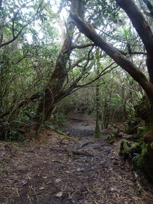 Ilet à Malheur et Aurère par le sentier Scout Mafate Ile de la Réunion randonnée