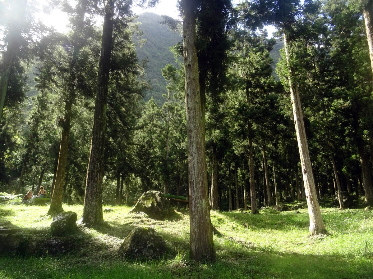 Forêt de Bélouve Salazie randonnée ile de la réunion Plaine des palmistes