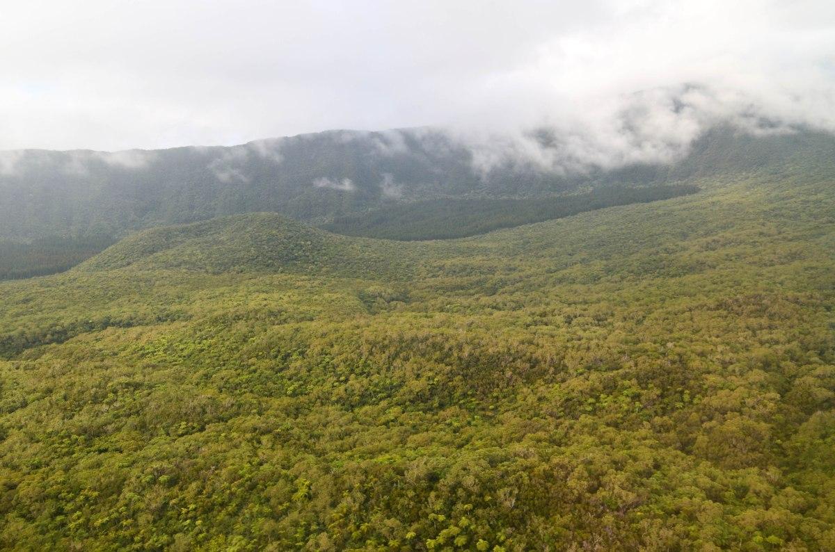 Plaine des palmistes ile de la réunion forêt de bélouve