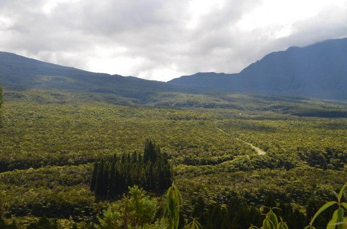 La forêt de Bélouve, Plaine des Palmistes, Ile de la Réunion
