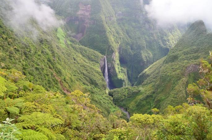 Randonnée plaine des palmistes Ile de la Réunion Trou de fer forêt de Bélouve