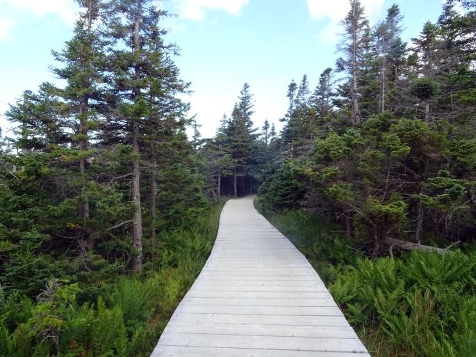 Cabot trail Skyline Trail Parc national du Cap Breton Nouvelle écosse itinéraire road trip est canadien randonnée
