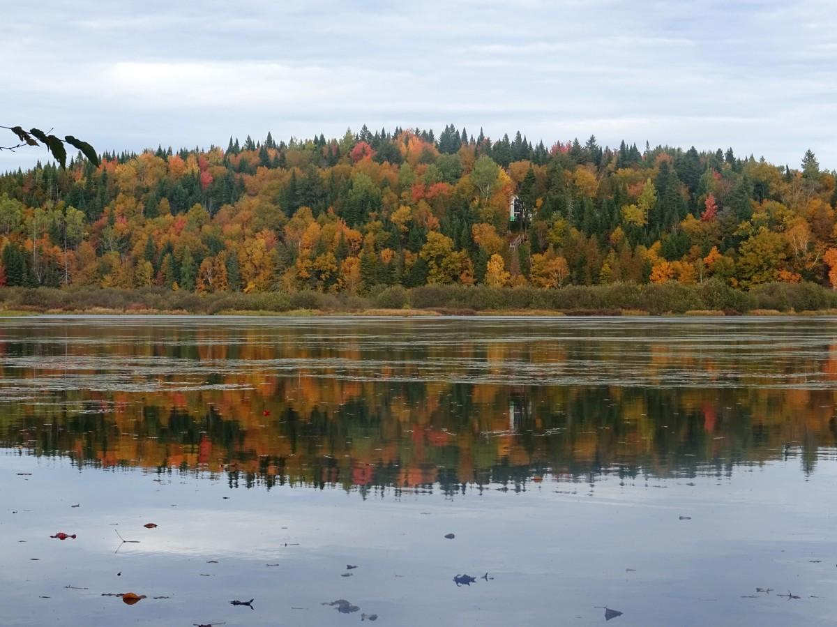 Randonnée facile d'automne à proximité de Québec city : Réserve naturelle des marais du nord