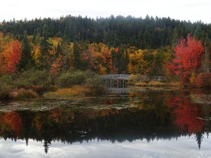 Randonnée facile d'automne à proximité de Québec city pour voir les couleurs : réserve naturelle des marais du nord Canada