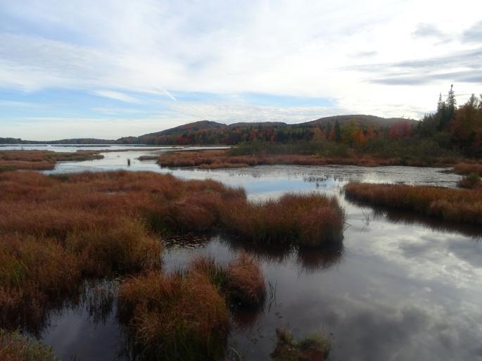 Randonnée d'automne Réserve naturelle des marais du nord canada