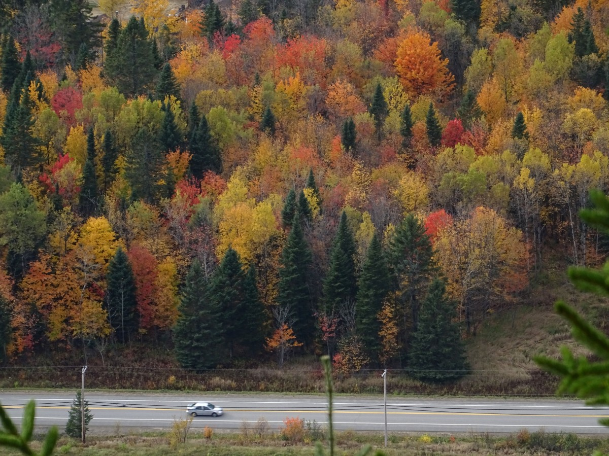 L'automne au Québec : Activité à faire à proximité de Québec city