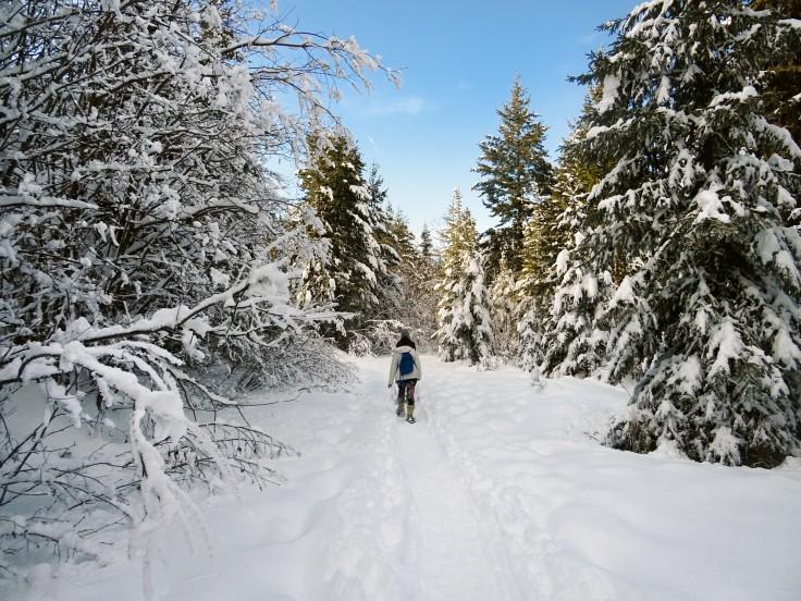 Randonnée raquette Kelowna panorama ridge trail Telemark, Okanagan valley Canada hiver