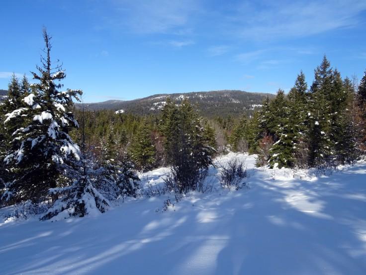 Activité hivernale à Kelowna : faire de la randonnée à Kelowna, Telemark, panorama ridge trail