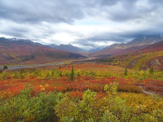 Automne au Parc Territorial de Tombstone, Dempster Highway, Yukon Territory