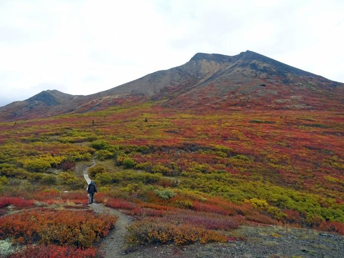 Randonnée Goldensides au parc territorial de Tombstone, Yukon, Dempster Highway