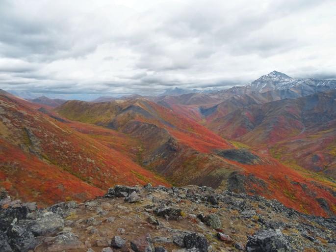 Randonnée Goldensides, automne au parc territorial de Tombstone, Yukon