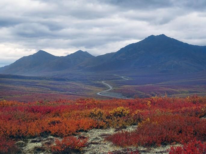 L'automne au parc territorial de Tombstone, Yukon, Canada