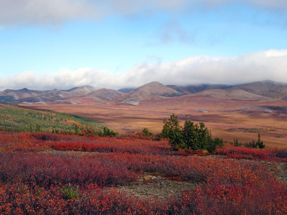 Cercle arctique, Dempster Highway, Yukon territory en automne