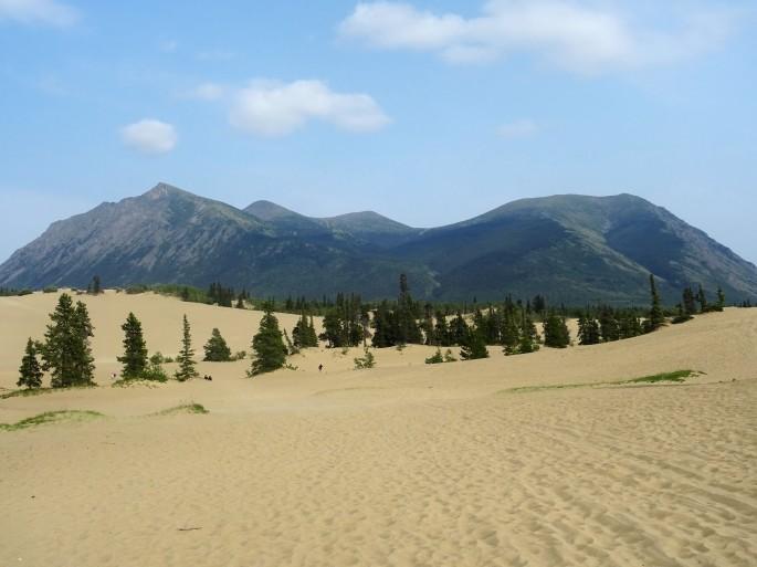 Carcross : Le plus petit désert du monde, situé au Yukon, CANADA