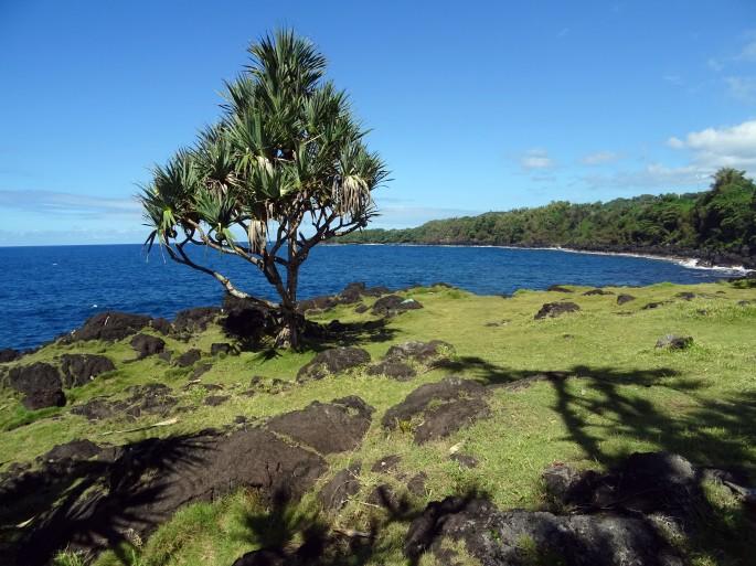 Cayenne, Sainte-Rose, Ile de la Réunion