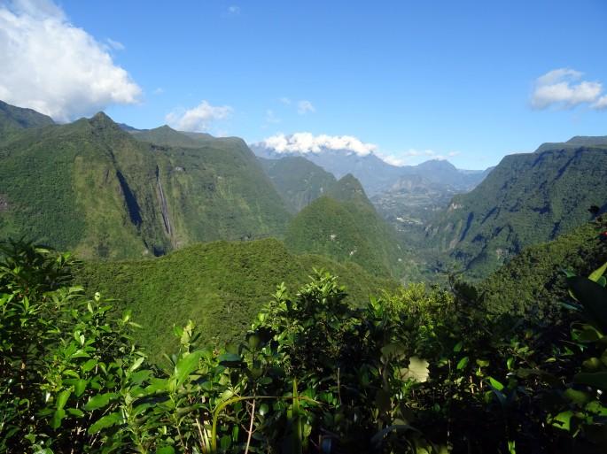 La forêt de Dioré, Saint-André, Ile de la Réunion