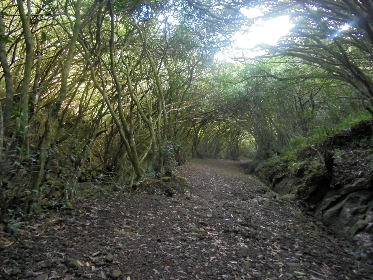 Forêt des ravenales, Saint-benoit, Ile de la Réunion