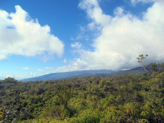 Randonnée à la forêt de l'Eden, Bras Panon, Ile de la Réunion