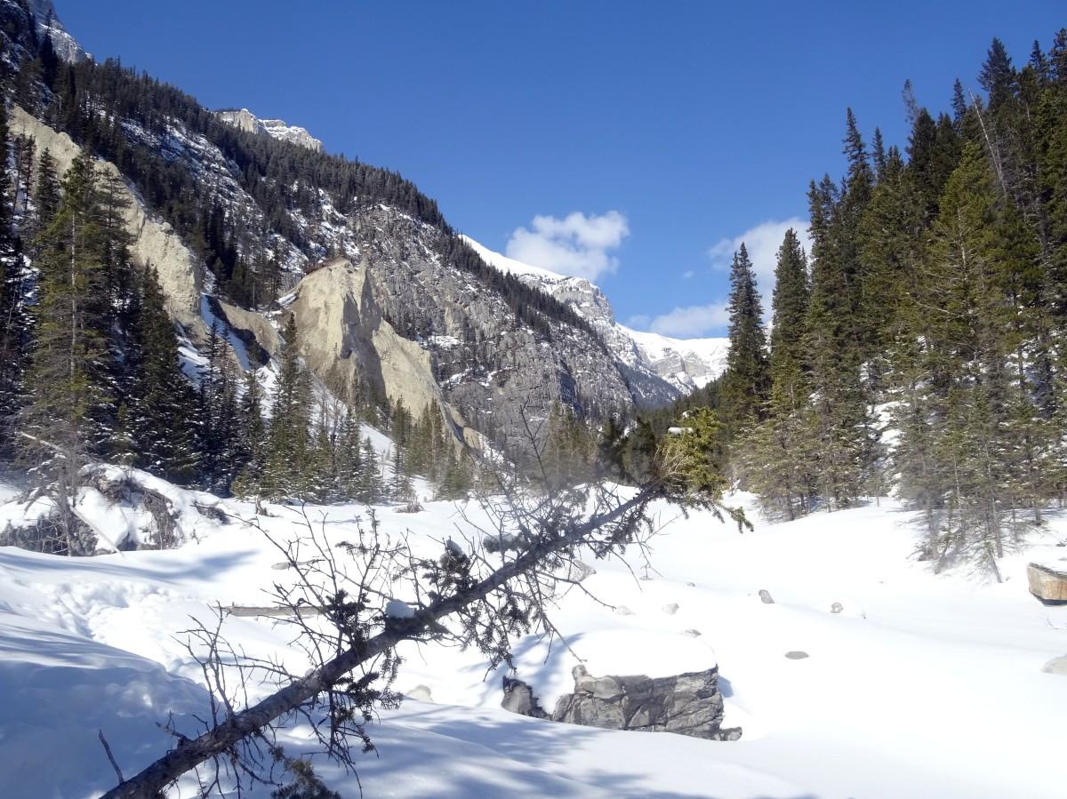 Randonnée Grotto canyon, Alberta, Canada